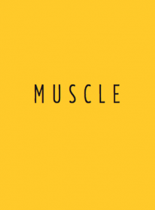 BOUDIER-muscle