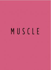 HEISSLER-muscle11