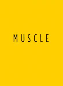 HEISSLER-muscle12
