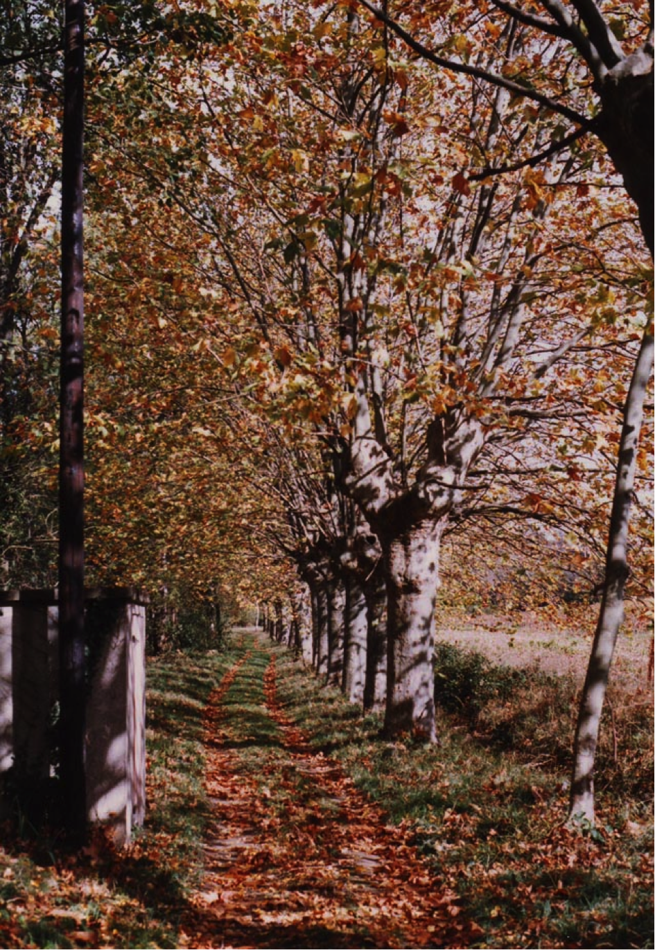 Le chemin qui mène au verger, vu depuis la maison.