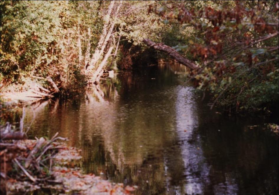 Le ruisseau de la propriété, près du chemin du verger.